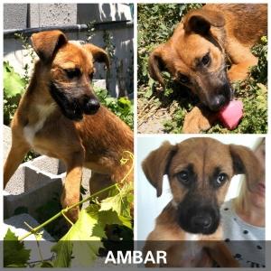 Ambar_1