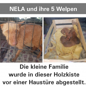 Nela und ihre 5 Welpen